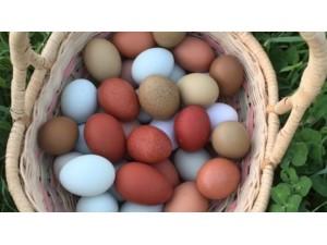 Eggs-for-eating