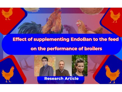 Effect of supplementing EndoBan to the feed on the performance of broilers