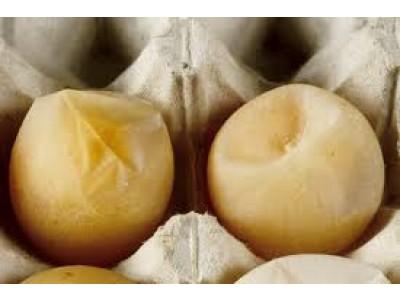 Egg Drop Symptoms (EDS)